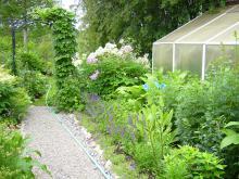 Grus har ersatt gräsmatta. Aubretia, kantväxt t.h.vilar inför nästa blomning