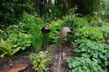 I framkant Philipendula variegata, t.v. Veratrum nigrum(svart nysrot)