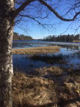 20 maj 2017 Fortfarande finns det is på sjön