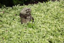 Figur på stubbe i brokbladig kers
