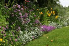 Kantväxter: Liten toffelblomma,rosenmynta,silverek och timjan