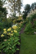 Sommarvivor, tacksamma, lättodlade kantväxter