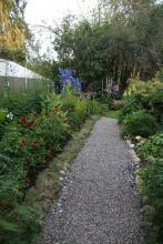 Grusgång istället för gräsmatta. Grus och växter passar bra ihop